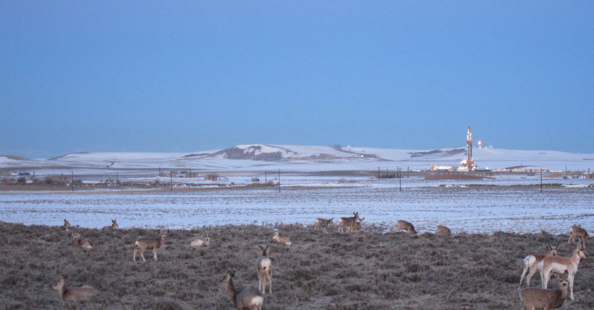 Deer and antelope mingle in the Pinedale Anticline natural gas f