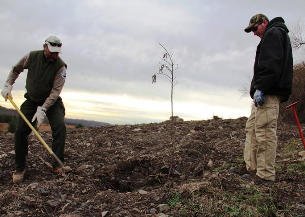 Patrick Angel, of the U.S. Office of Surface Mining, and Mike French, of Green Forests Work, planting a tree at a former Eastern Kentucky surface mine.