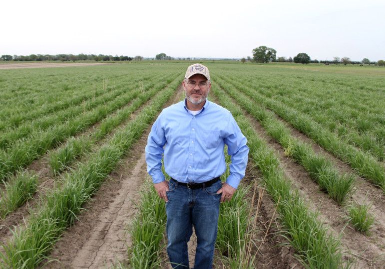 USDA grass researcher Rob Mitchell stands in a field of switchgrass grown to make ethanol. Switchgrass is knee-high by the end of May but can grow as high as 10 feet.