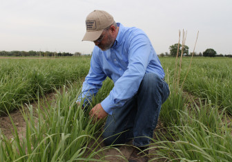 Mitchell inspects a patch of switchgrass planted to produce ethanol. Switchgrass is perennial and drought tolerant, which makes it a good option for areas where it is difficult to grow corn or soybeans.