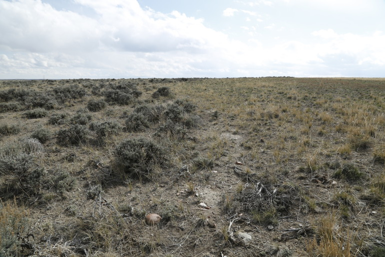 Untouched sagebrush habitat (left) next to a 3-year-old Jonah Energy restoration project.