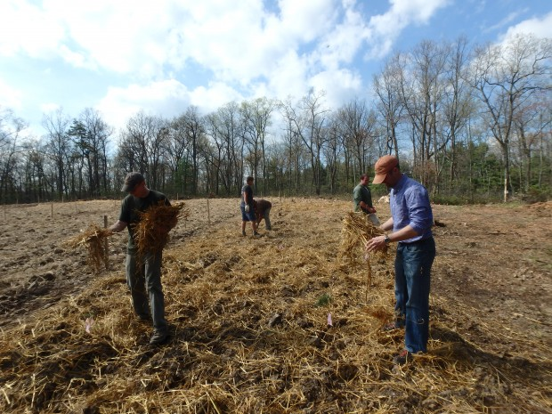 Researchers from Penn State University and the state Department of Conservation and Natural Resources have created a mock wellpad to study ways to reclaim forest land disturbed by gas development.
